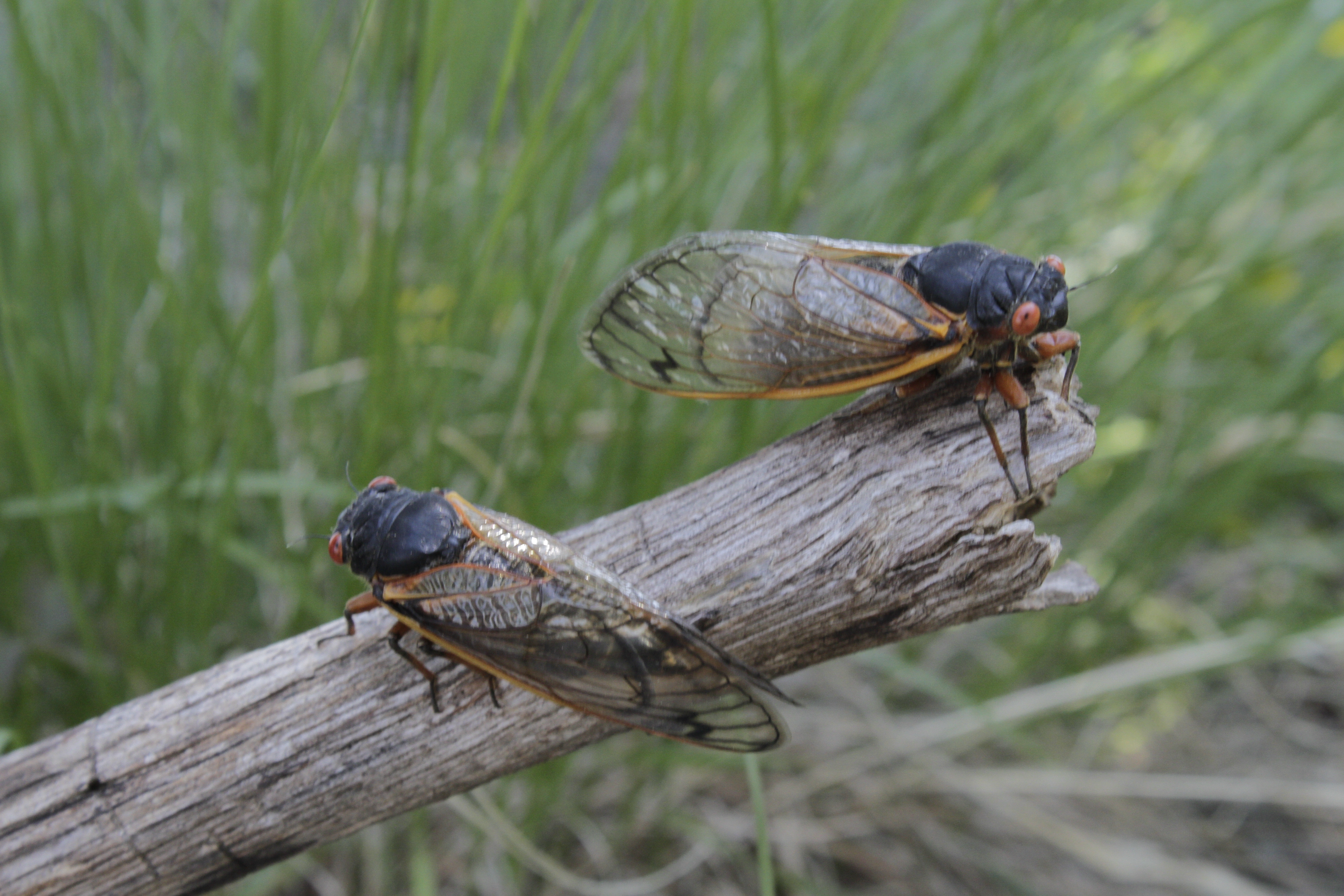 Time Shift Your TV – Cicadas
